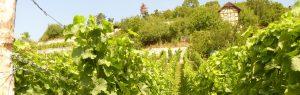 Biowein aus dem Saale-Unstrut-Weinanbaugebiet